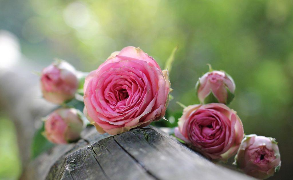 バラの成分
