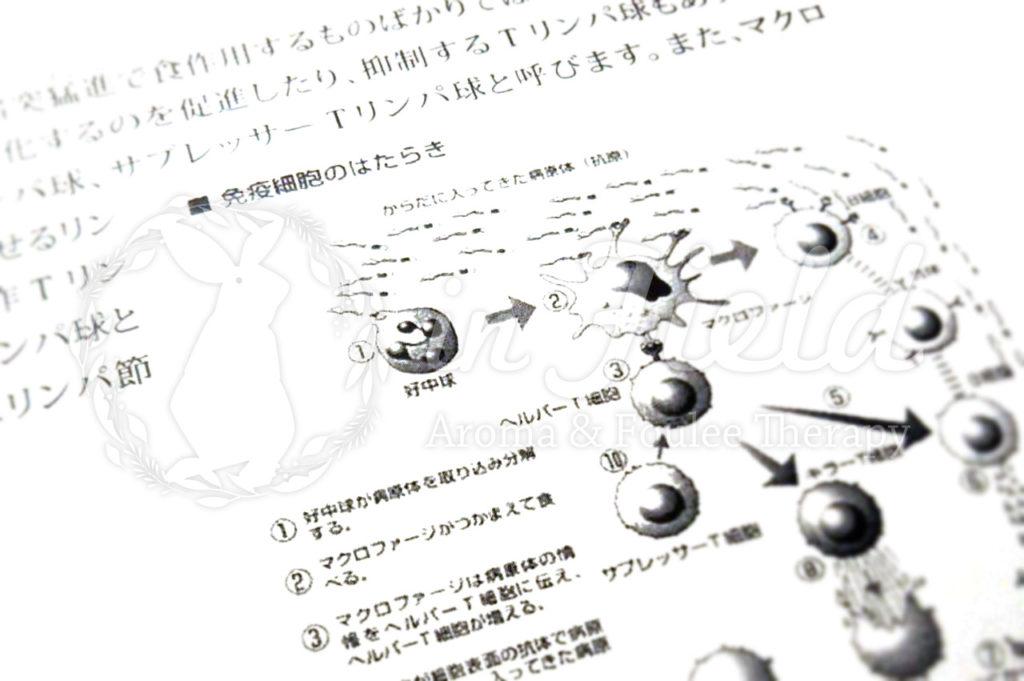 細胞の勉強